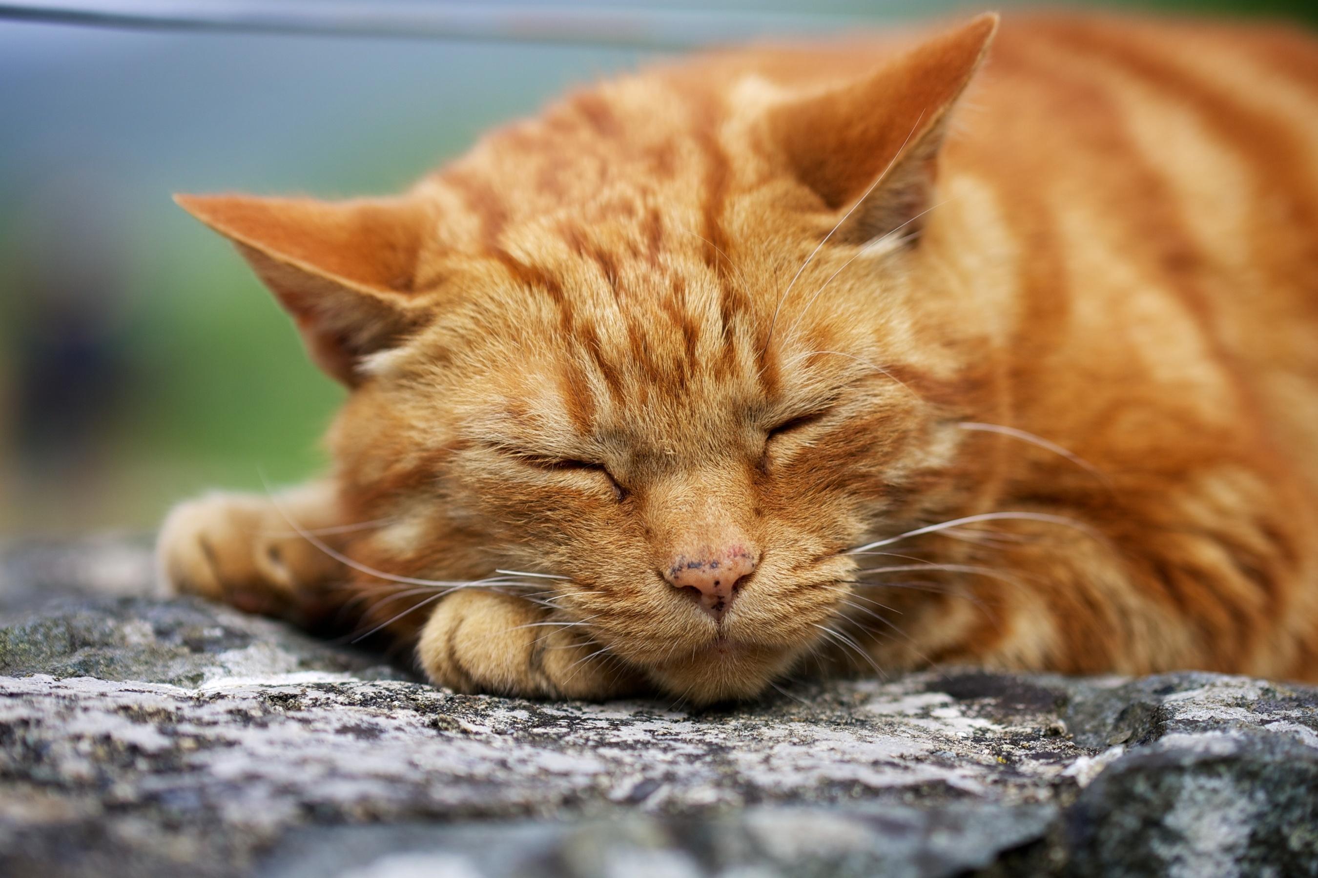 kitty cute sleeping wallpaper