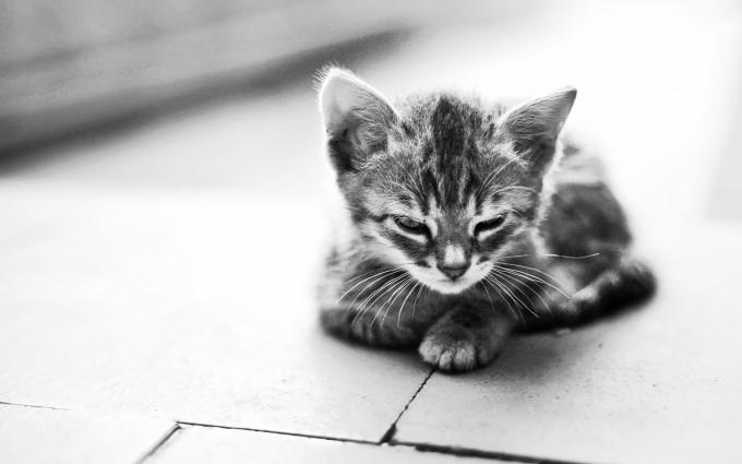 kitty photography