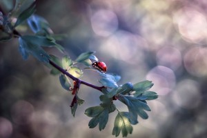 ladybug nature live wallpaper