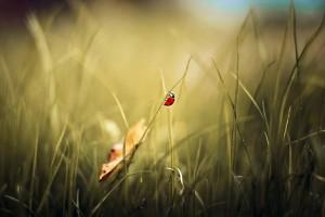 ladybug pc wallpaper