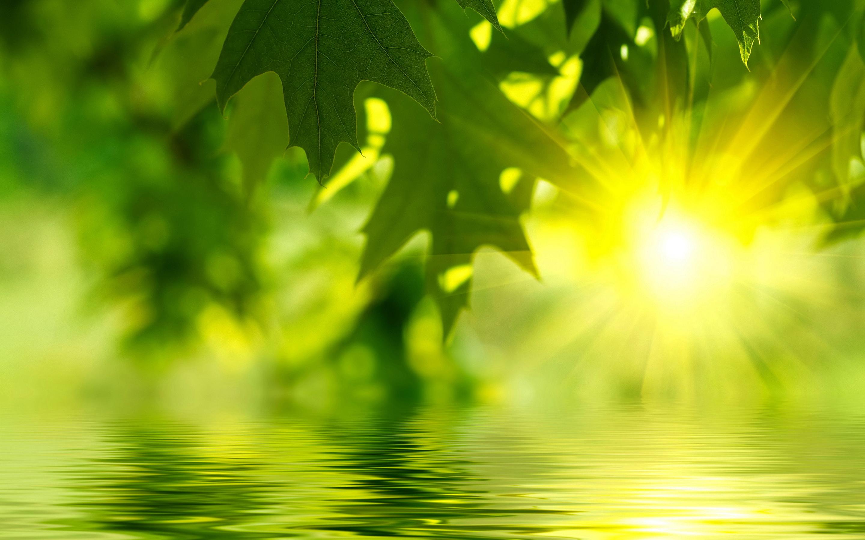 lake green leaves
