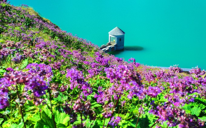 lake wallpaper flowers