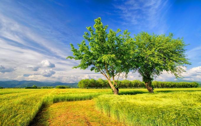 landscape cornfield green