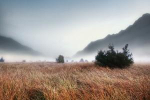 landscape foggy grass
