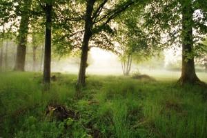 landscape morning dew