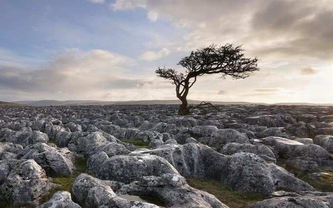 landscape tree download