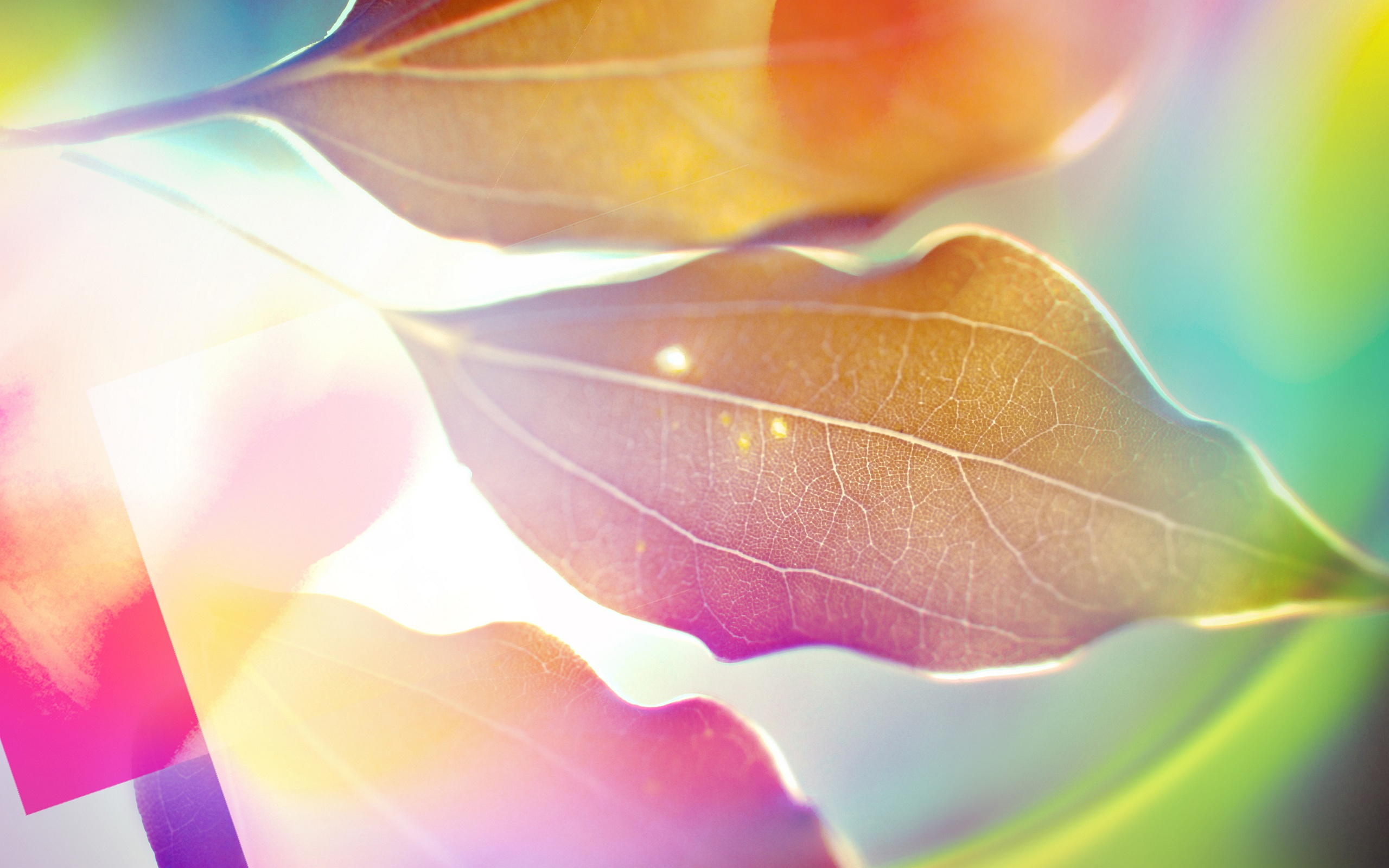 leaves picture sunlight