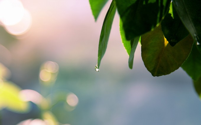 leaves picture waterdrops