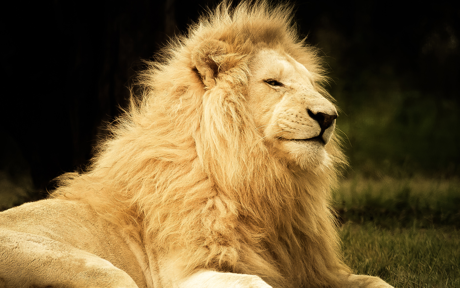 lion majestic animal