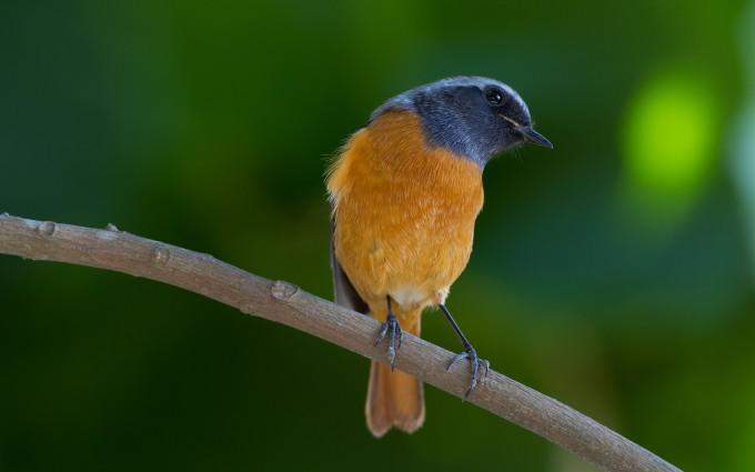 little bird images