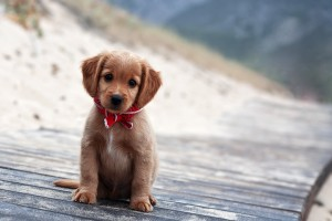 little puppy sweet photo