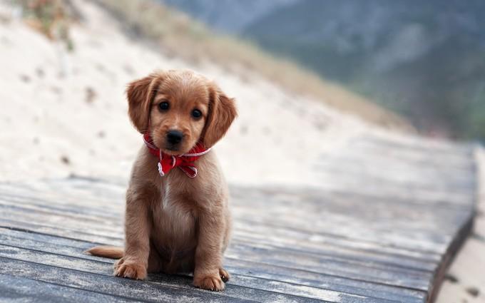 little puppy sweet photo