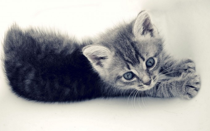 lovely kitty nature background
