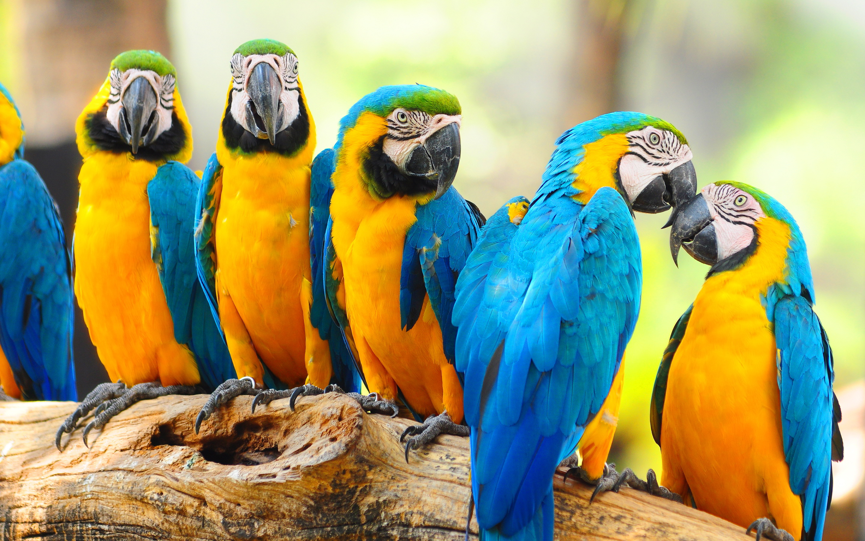 macaw parrots beautiful