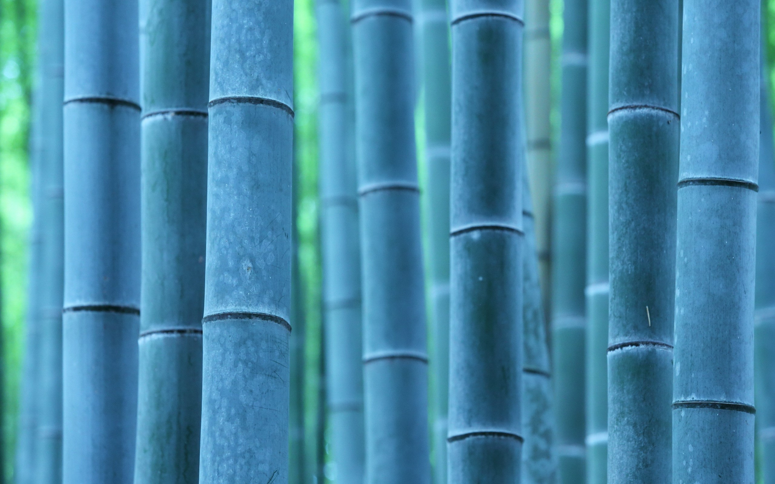 macro pictures bamboo