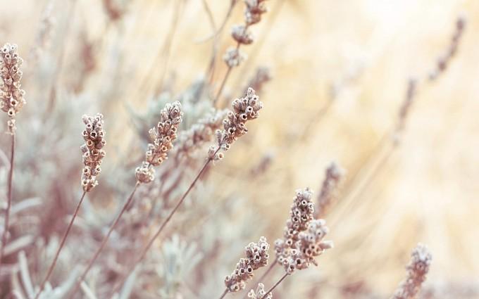 macro pictures plants