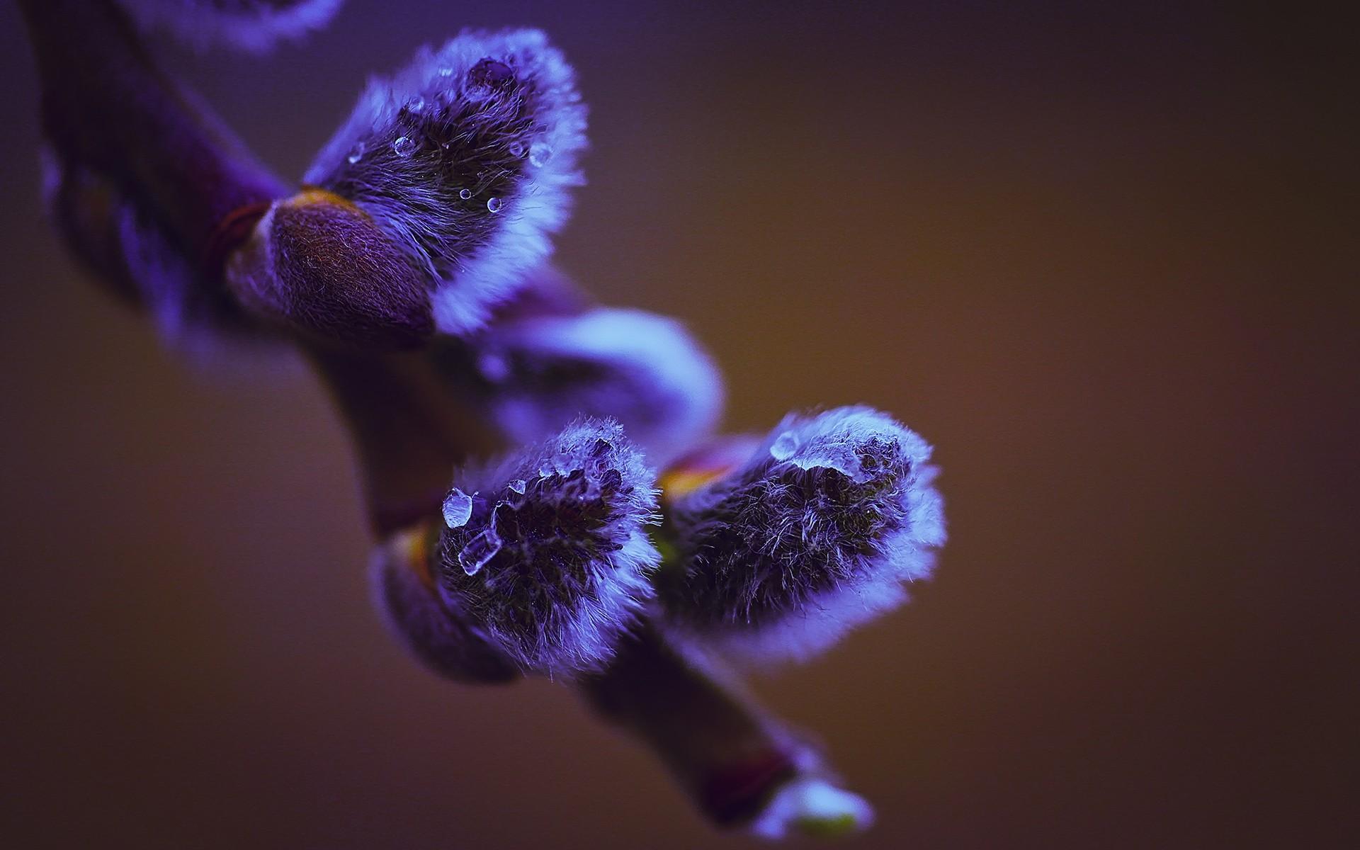 macro pictures purple flower