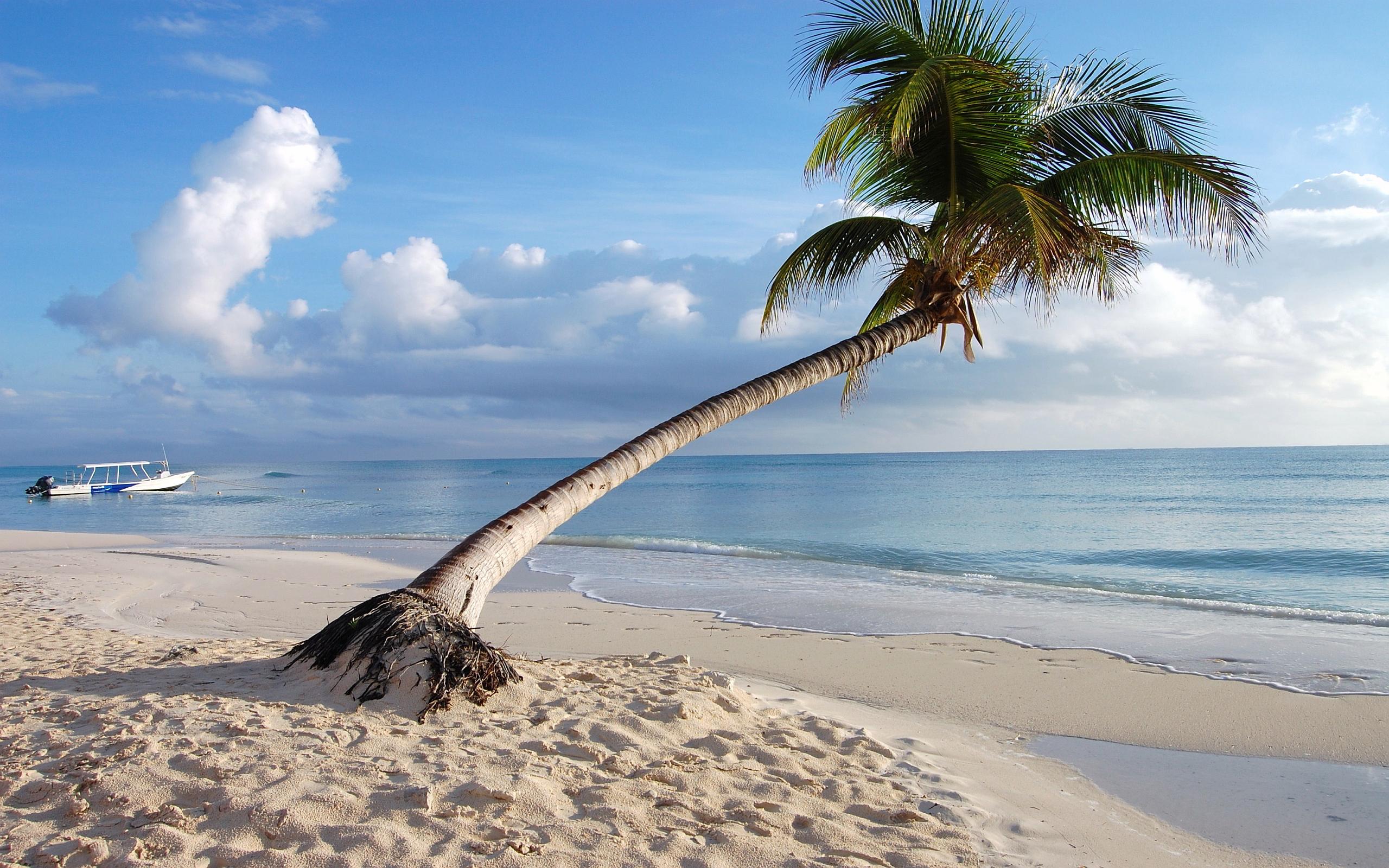 maldives beach palm