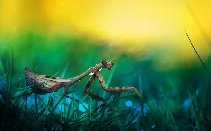 mantis movies wallpaper