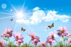 meadow wallpaper butterflies