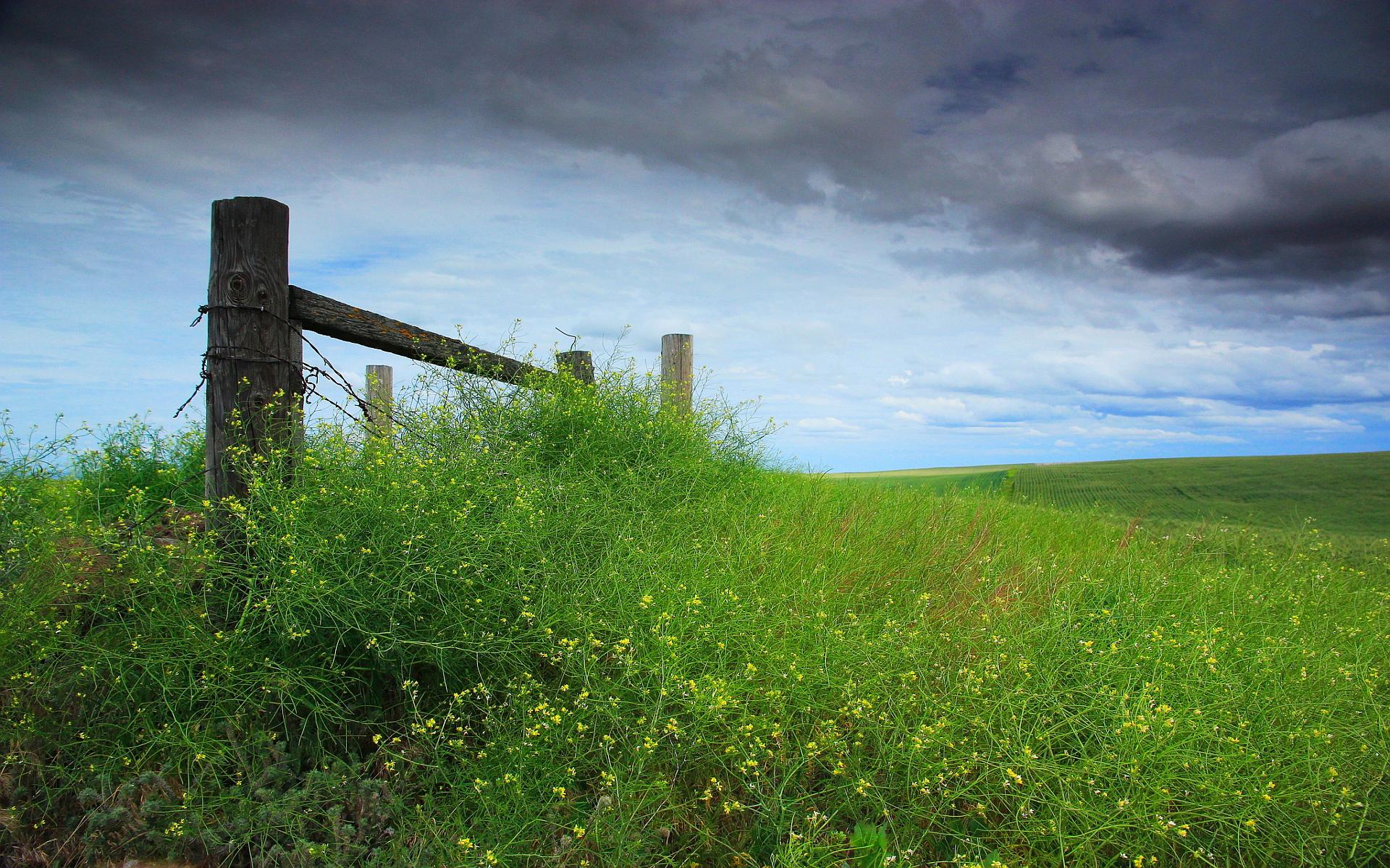 meadow wallpaper grass