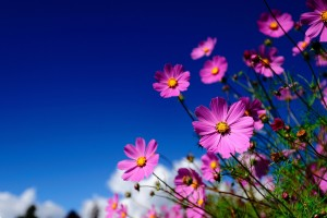 meadow wallpaper pink flower