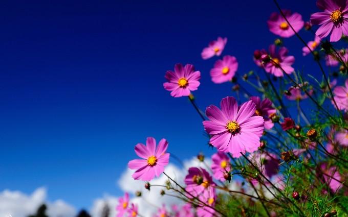 meadow wallpaper pink flower