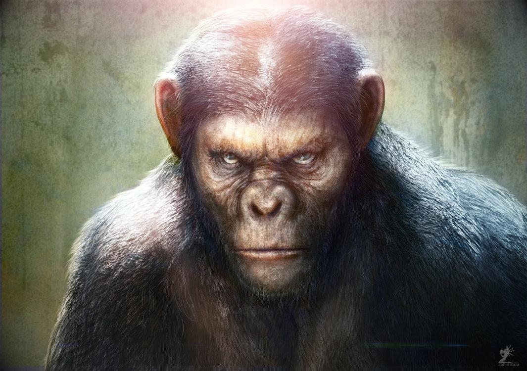 monkey ape wallpaper
