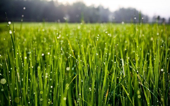 morning dew drops on grass