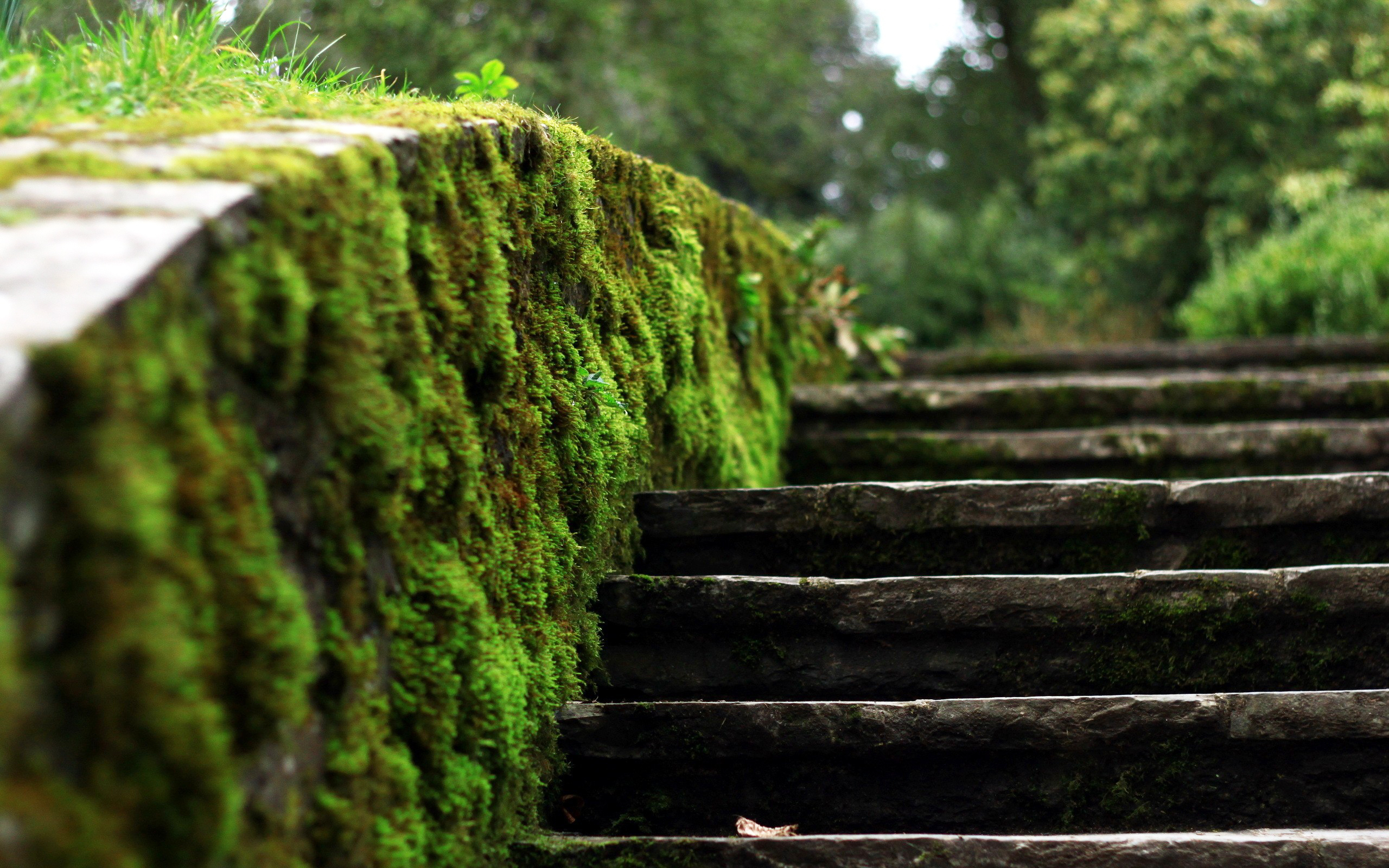 moss stairs wallpaper
