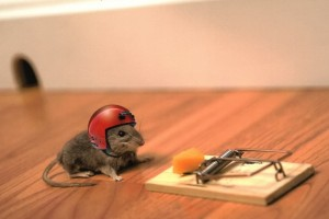 mouse funny wallpaper