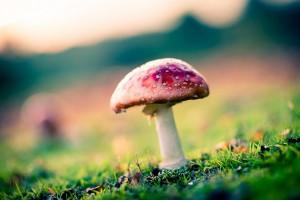 mushroom images nature