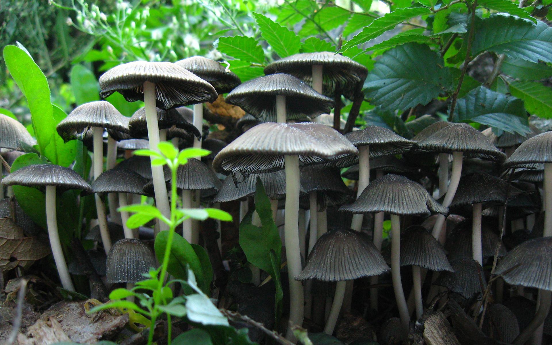 mushroom wallpaper cogumelos