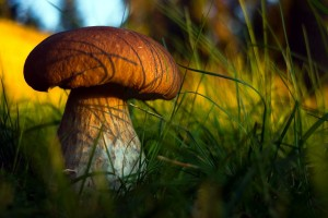 mushroom wallpaper dense forest