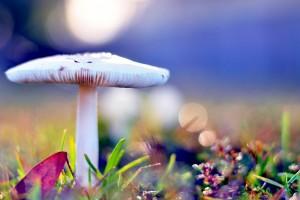 mushroom wallpaper lovely