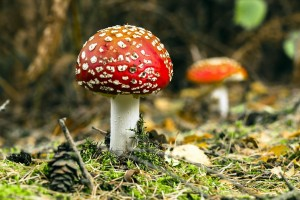 mushroom wallpaper nature cool