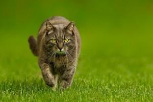 nature cat on grass