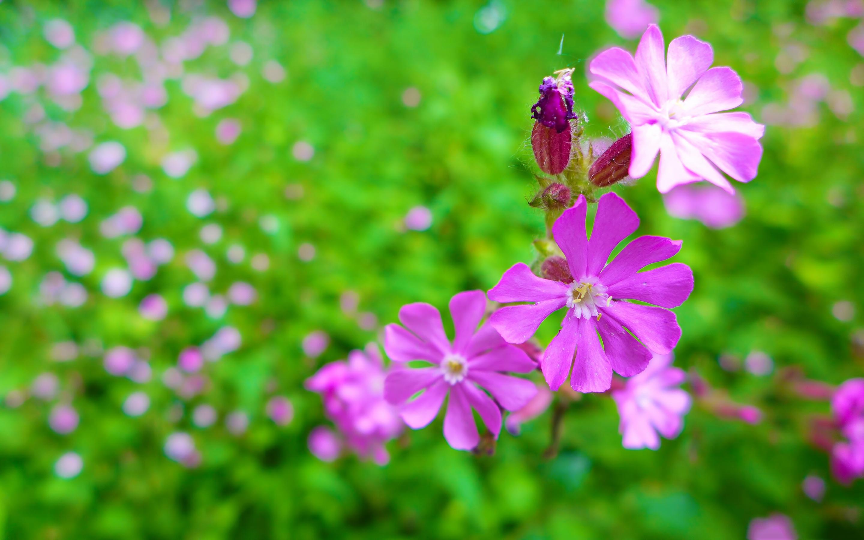 nature garden pictures