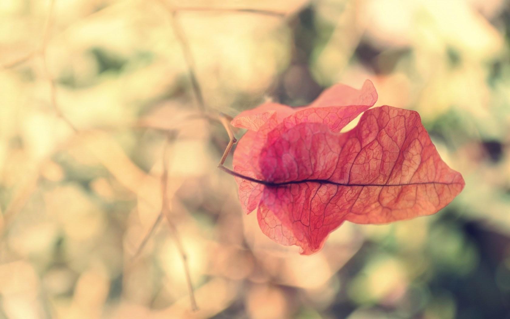 nature leag twig wallpaper