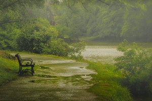 nature rain beautiful