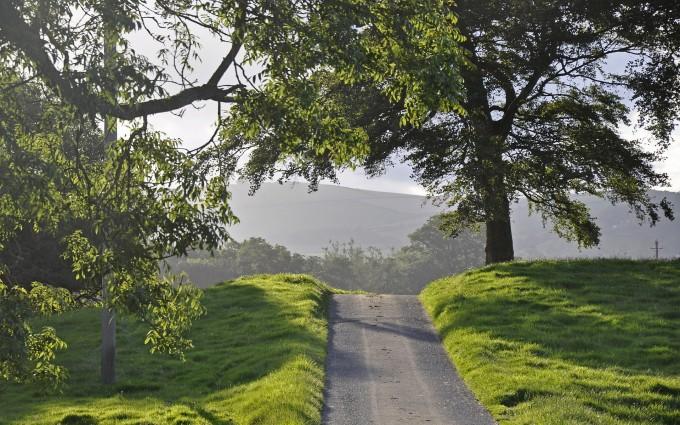 nature road