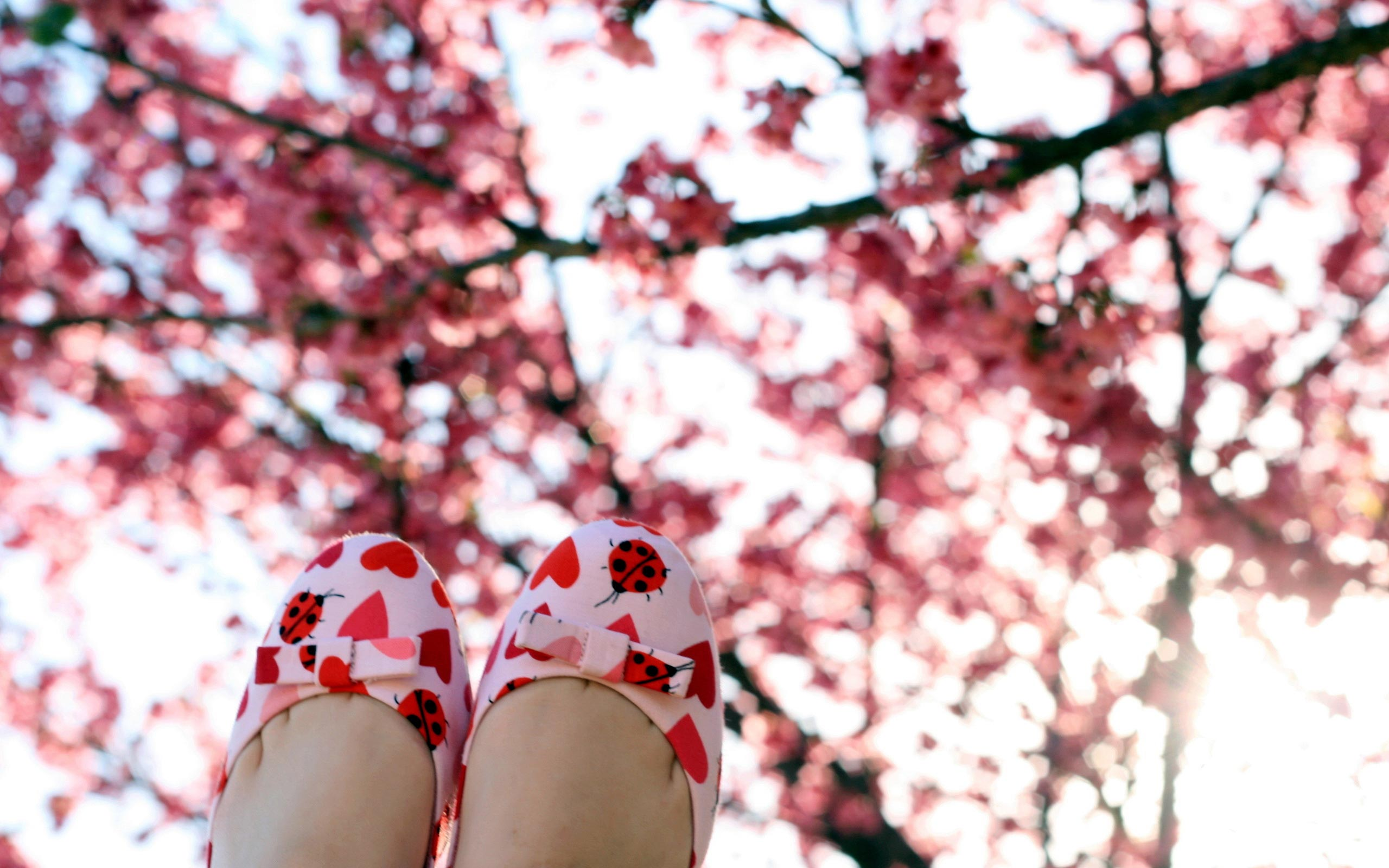 nature spring wallpaper shoes
