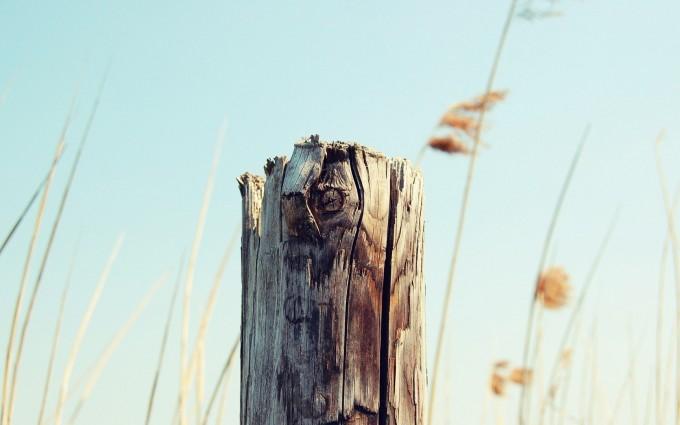 nature tree broken stump