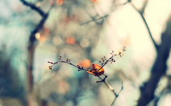 nature twig leaf images