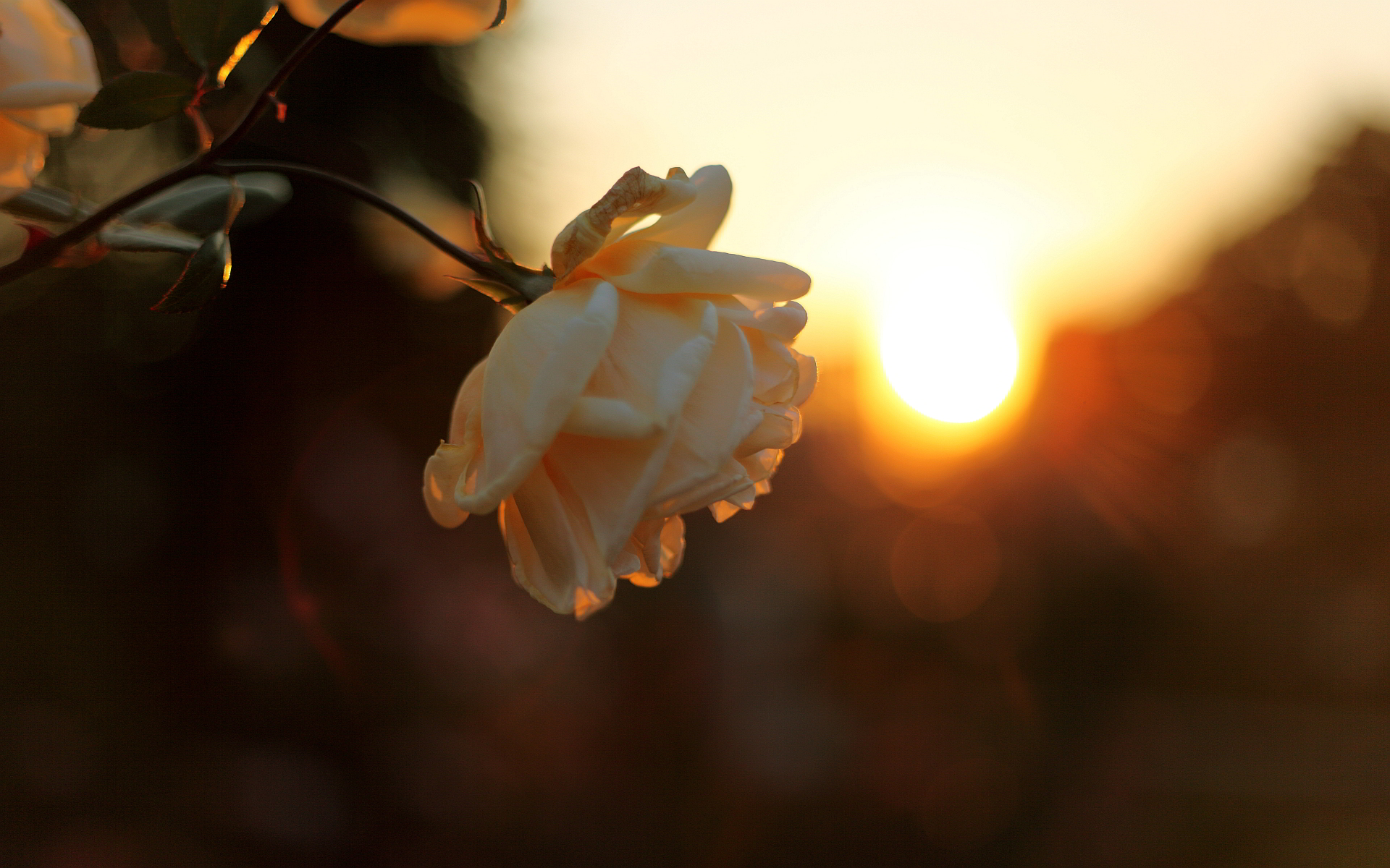 nice sunset wallpapers flower