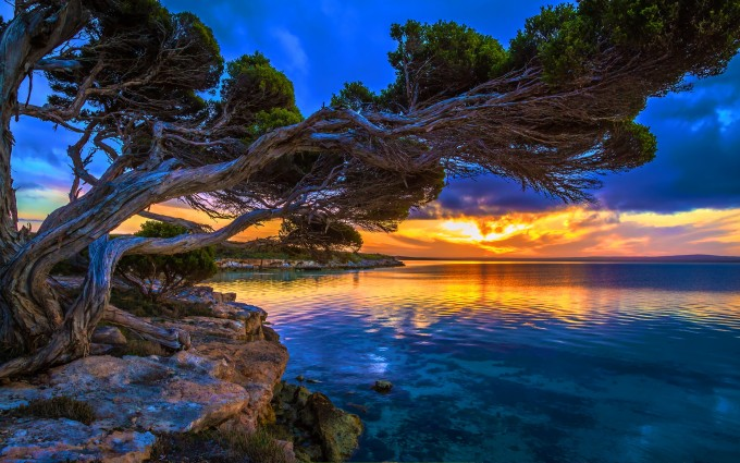 nice sunset wallpapers tree