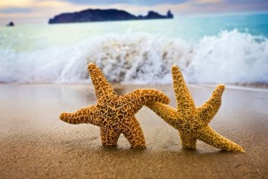 ocean wallpaper starfish