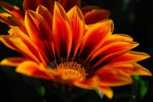 orange flower hd nature