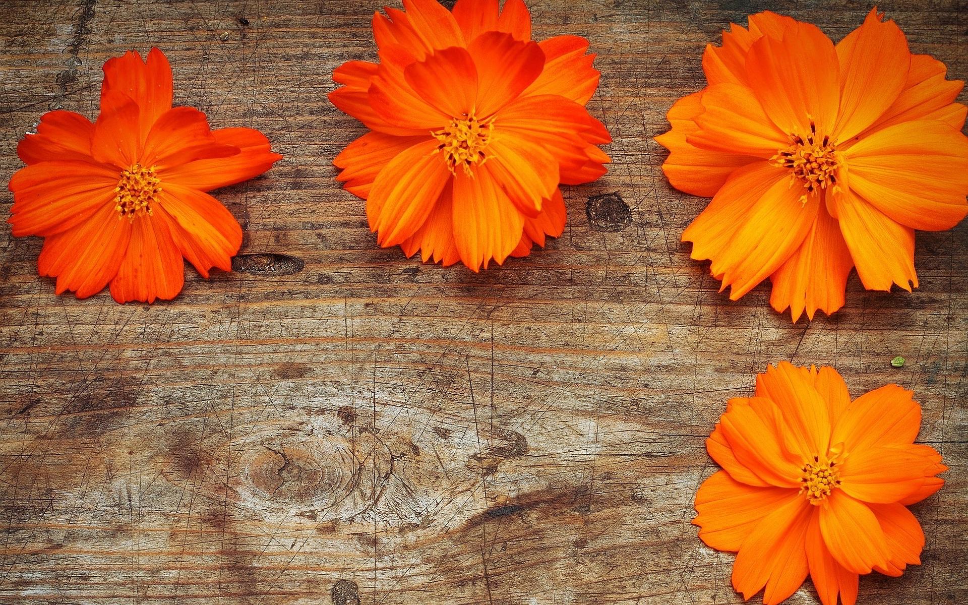 orange flowers free download