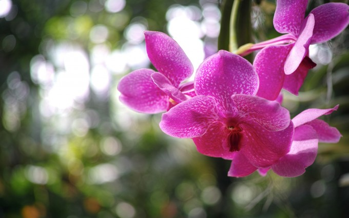 orchid 1080p